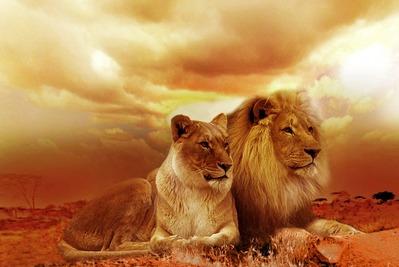 ライオン 獅子