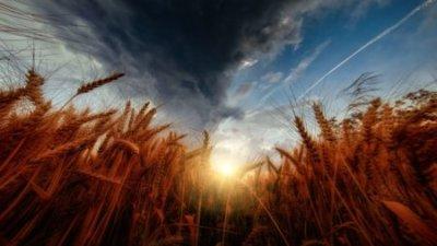 畑 収穫 空