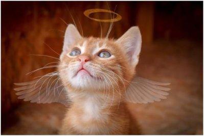 エンジェルナンバー 猫