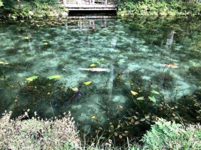 10.モネの池~頭の部分にハートのついた鯉をみつけると恋が成就