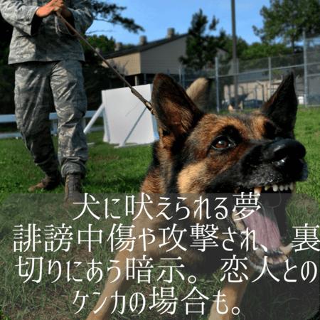 犬の夢【夢占い一覧表】忠誠心や友情をあらわす