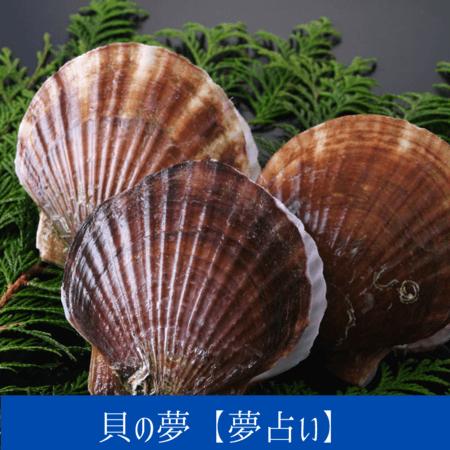 貝の夢【夢占い一覧表】何かから身を守りたいという潜在意識を象徴