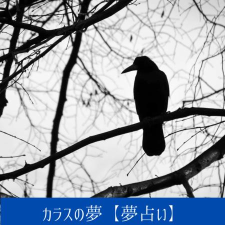 カラスの夢【夢占い一覧表】トラブルや不吉なできごとの象徴
