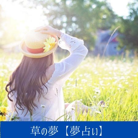 草の夢【夢占い一覧表】成長や豊かさ・力強さの証