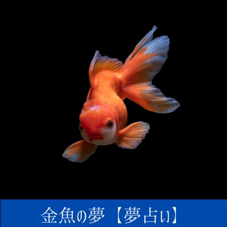 金魚の夢【夢占い一覧表】無意識の感情や想定外のできごとがおこなる暗示