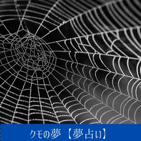 クモの夢【夢占い一覧表】女性同士のトラブルや対人関係をあらわす