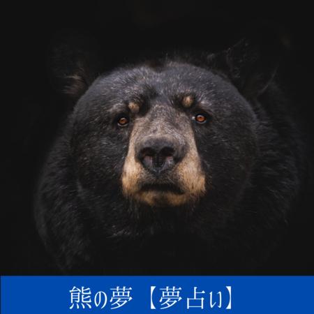 クマの夢【夢占い一覧表】母性の象徴、よくも悪くもあなたに影響をあたえる人物