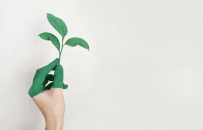 緑が好きな人のスピリチュアルな意味
