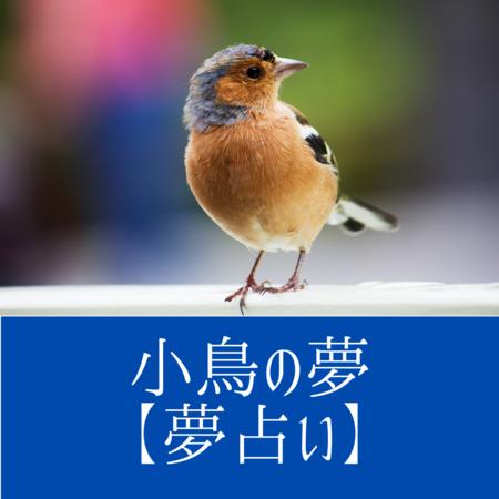 小鳥の夢の意味:あなたに思いを寄せる相手があらわれる