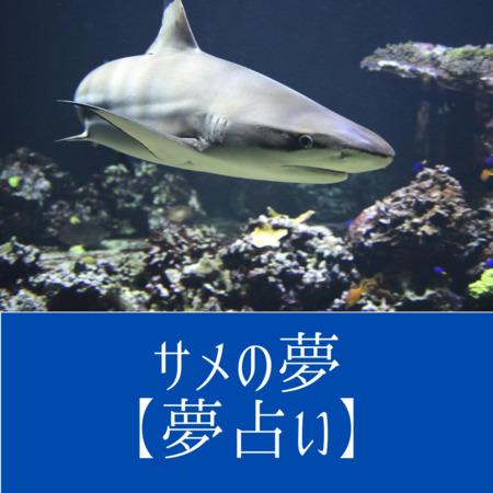 サメの夢の意味:ピンチのおとずれを暗示